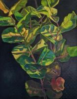 Botanicals - Summer Sea Grapes - Oil On Canvas